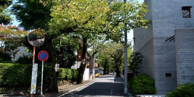 世田谷区の街情報|緑が多く環境も良くシニアにも住みやすい(東京都)