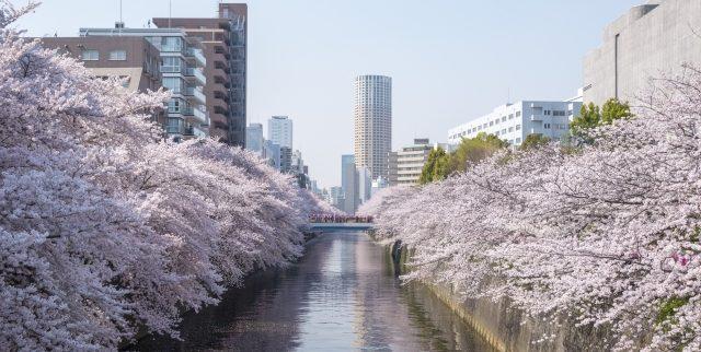 目黒区の街情報|洗練された雰囲気で著名人も多く住む憧れの街(東京都)