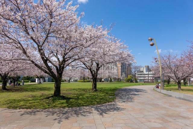 江戸川区小松川公園の桜