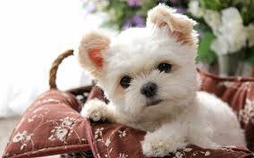 コロナ自粛で愛犬との過ごし方は変わった!?飼い主たちに聞いたペットの変化は?