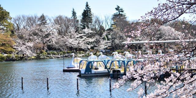 武蔵野市|シニア向け賃貸・有料老人ホームおすすめ7選をご紹介